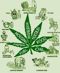 hemp uses.jpeg